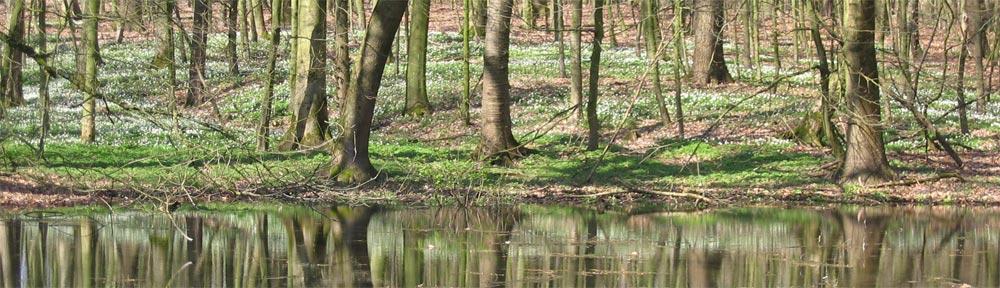 Zeitberatung und Waldcoaching
